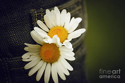 Photograph - Margarite Flowers by Dimitar Hristov