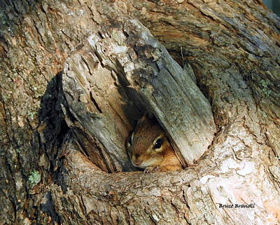 Moody Trees - Mariannes by Bruce Brandli