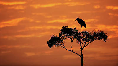 Photograph - Maribou Stork On Tree With Orange Sunrise Sky by Susan Schmitz