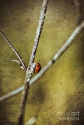 Photograph - Marienkaefer - Ladybird by Mandy Tabatt