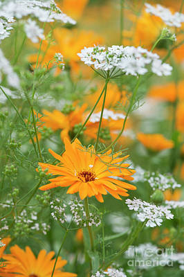 Photograph - Marigold And Coriander  by Tim Gainey
