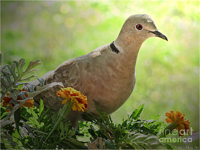 Art Print featuring the photograph Marigold Dove by Debbie Portwood