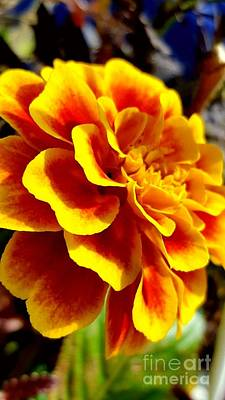 Photograph - Marigold Happy by Marlene Williams