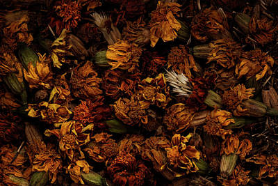 Photograph - Marigold Harvest by Erica Kinsella