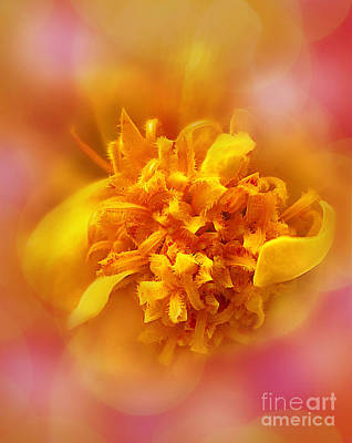 Photograph - Marigold Party by Judi Bagwell