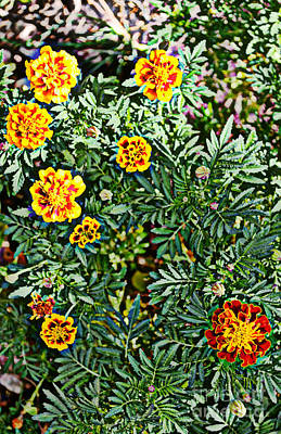 Photograph - Marigolds 2 by Diane montana Jansson