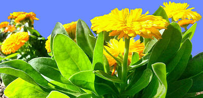 Pop Art Rights Managed Images - Floral Marigolds Royalty-Free Image by Christine McCole