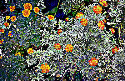 Photograph - Marigolds by Diane montana Jansson