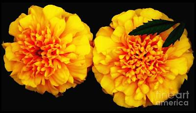 Art Print featuring the photograph Marigolds With Oil Painting Effect by Rose Santuci-Sofranko
