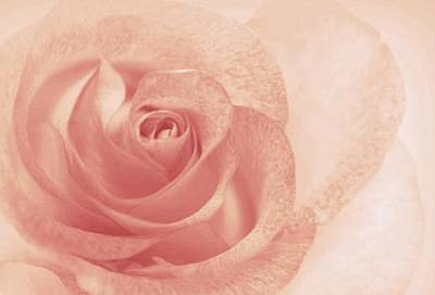 Roses Photograph - Marilyn's Sweet Rose by The Art Of Marilyn Ridoutt-Greene