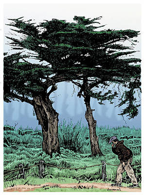 Cypress Tree Drawing - Marina Cypress by Joseph Juvenal