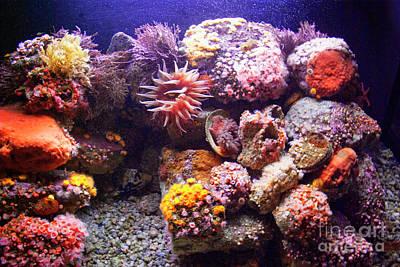 Photograph - Marine Life by Jim And Emily Bush