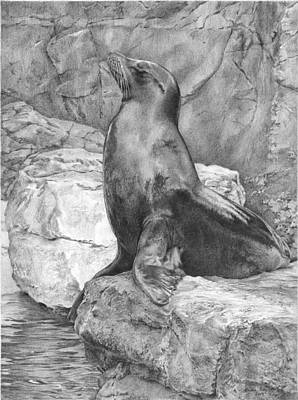 Sea Lion Drawing - Marine Pride by Andrea England