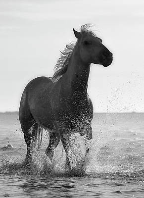 Photograph - Maritime Stallion by Daniel Hagerman