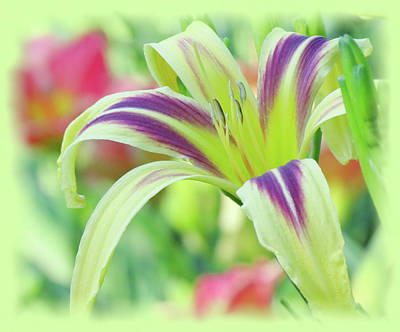 Photograph - Marked Lily - Daylily by MTBobbins Photography
