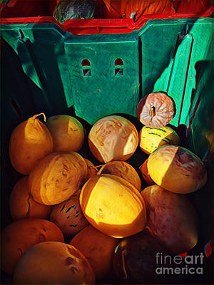 Photograph - Market Harvest - Autumn Squash by Miriam Danar