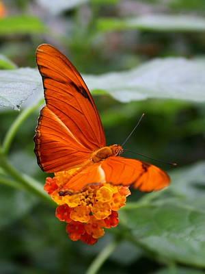 Photograph - Marmalade Delight by David Dunham