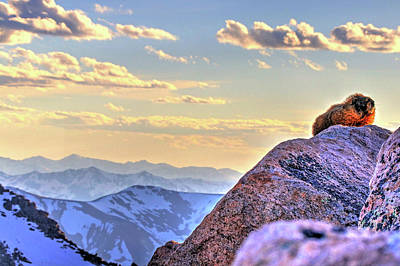 Photograph - Marmot At Sunset by Scott Mahon