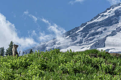 Photograph - Marmot Checking Out His Neighborhood At Mount Rainier, No. 1 by Belinda Greb