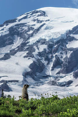 Photograph - Marmot Checking Out His Neighborhood At Mount Rainier, No. 2 by Belinda Greb