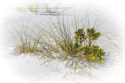 White Grape Photograph - Marngrove And Sea Oats by Marvin Spates