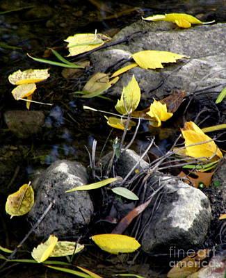 Fallen Leaf On Water Photograph - Marooned by Joe Jake Pratt