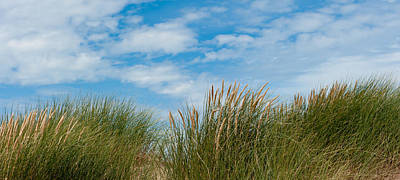 Photograph - Marram Grass And Sky I by Helen Northcott