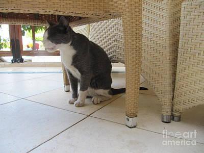 Photograph - Marriott Jordan Cat #3 by Donna L Munro