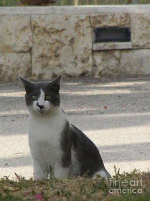 Photograph - Marriott Jordan Cat #4 by Donna L Munro