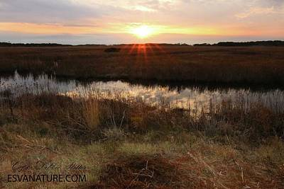 Photograph - Marsh 0405 by Captain Debbie Ritter
