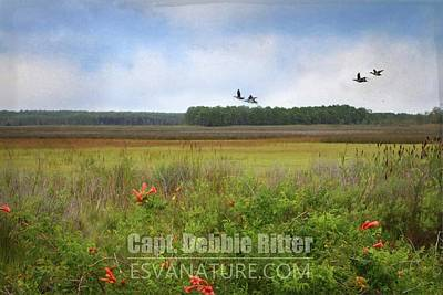 Photograph - Marsh 0607 by Captain Debbie Ritter