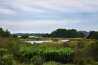 Photograph - Marsh 8290 by Captain Debbie Ritter