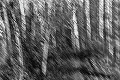 Photograph - Marsh Abstract by Thomas Young