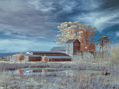 Photograph - Marsh And Barn In Infrared 1 by Greg Nyquist