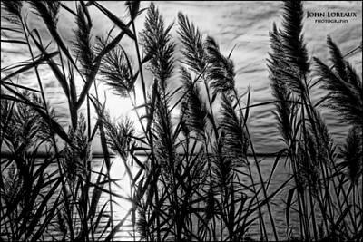 Photograph - Marsh Grass Bw by John Loreaux