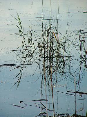 Marsh Grass Art Print by Donna Thomas