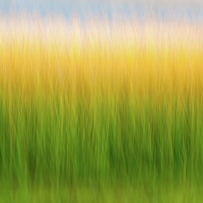 Photograph - Marsh Grass by John Whitmarsh