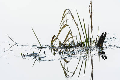 Photograph - Marsh Grass by Robert Potts