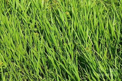 Marsh Grasses Art Print