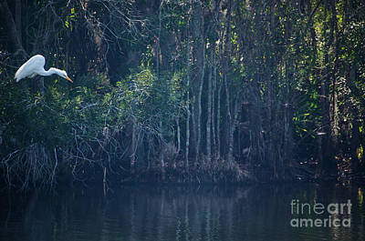 Photograph - Marsh Island Brid Sanctuary by Dale Powell