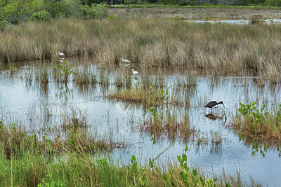 Photograph - Marsh Life by John M Bailey
