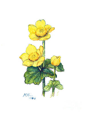 Wild Flowers Drawing - Marsh Marigold by Nell Hill