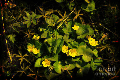 Digital Art - Marsh Marigolds by David Blank