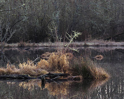 Photograph - Marsh Morning by I'ina Van Lawick