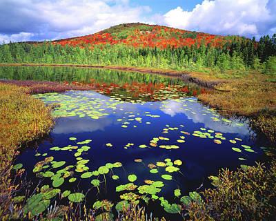 Photograph - Marsh Pond by Frank Houck
