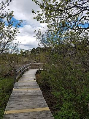 Photograph - Marsh Walk by Mary Capriole