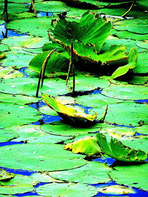 Photograph - Marsh Waterlilies by Beth Akerman