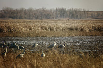 Photograph - Marsh Wildlife by Susan McMenamin