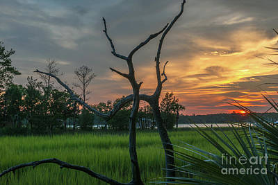 Photograph - Marsh Wood Sunset by Dale Powell