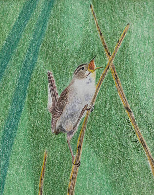 Painting - Marsh Wren by Wade Clark